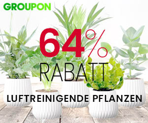 64% günstiger: 5 luftreinigende Pflanzen